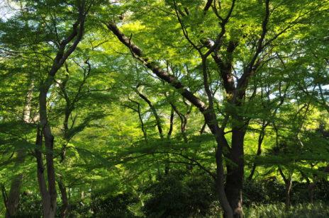 <親子イベント>自然の中で心を開こう!~森林セラピー体験~in新宿御苑